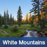 Luxury homes and cabins in the White Mountains of Arizona includes Show Low, Pine, Pinetop, Heber, Forest Lakes